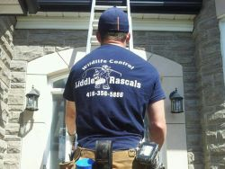 Liddle Rascals | Wildlife Removal Pickering
