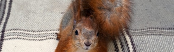How to Solve Your Squirrels in the Attic Problem – For Good!
