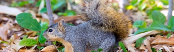 Effective Tips on How to Keep Squirrels Out of your Garden