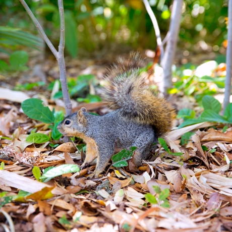 24 Squirrel Families Are Native Canadians Who Don't Migrate South for Winters