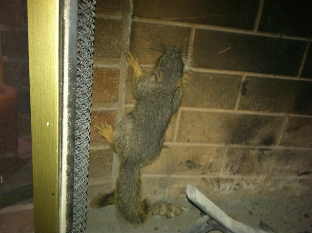 Is a Squirrel Stuck in Your Fireplace? Don't Panic!