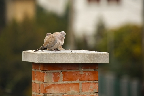 Removing Birds From Your Fireplace Safely And Effectively
