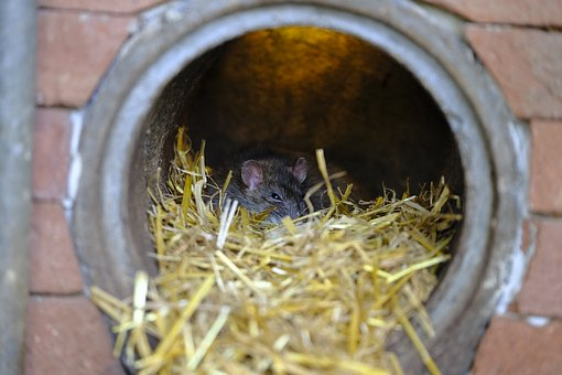 Why Choose Humane Wildlife Removal Services