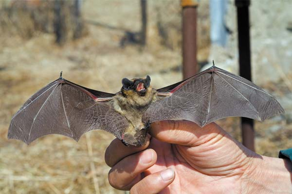 Bats-are-endangered-species