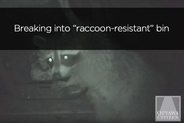 Breaking into raccoon resistant bin