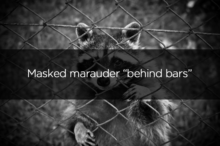 Masked marauder behind bars