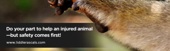 How to Help an Injured Animal