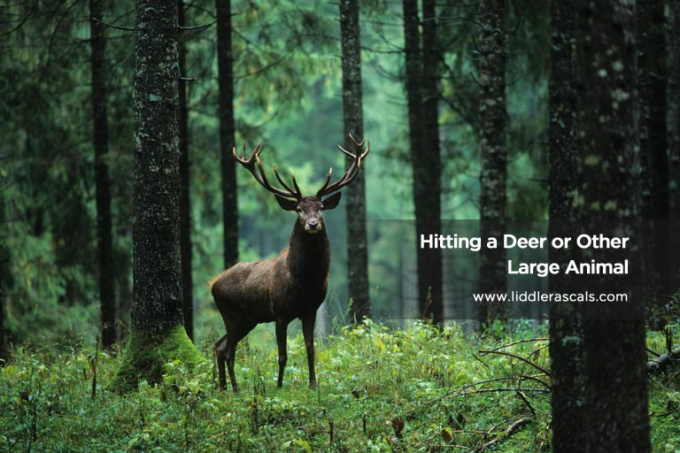 Hitting a Deer or Other Large Animal
