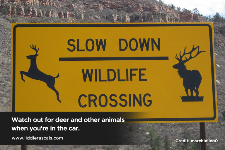Watch out for deer and other animals when you're in the car.