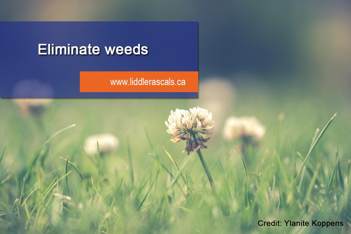 eliminate weed