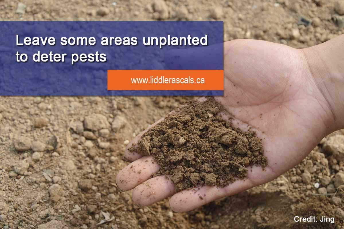leave areas unplanted