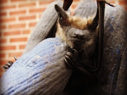 Bat Removal and Control Canada