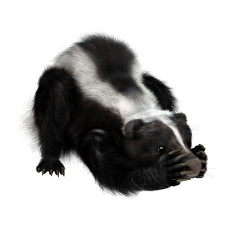 Skunk Spray Does More Than Smell, It Can Hurt Your Dog | Liddle Rascals