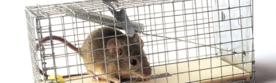 Humane Hints to Manage Mice