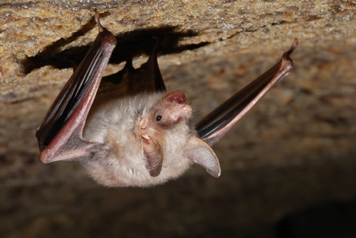 Does Your Home or Property Attract Bats?