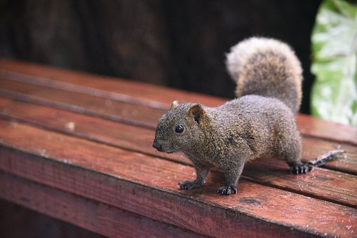 Why DIY Wildlife Removal is a Bad Idea