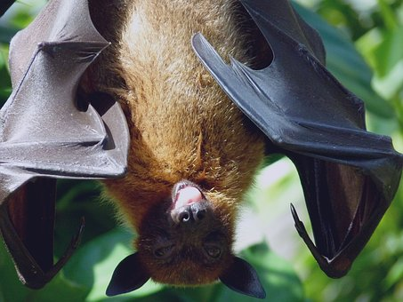 How Bats Are Helpful