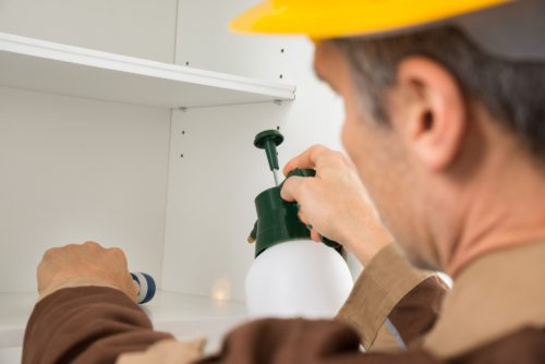 Qualities to Look for in a Pest Control Provider