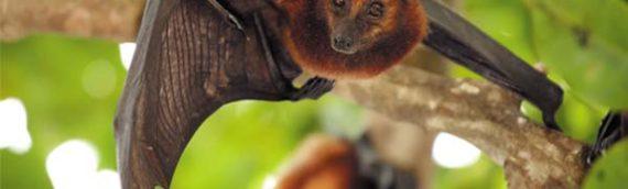 Is it Legal to Kill a Bat?
