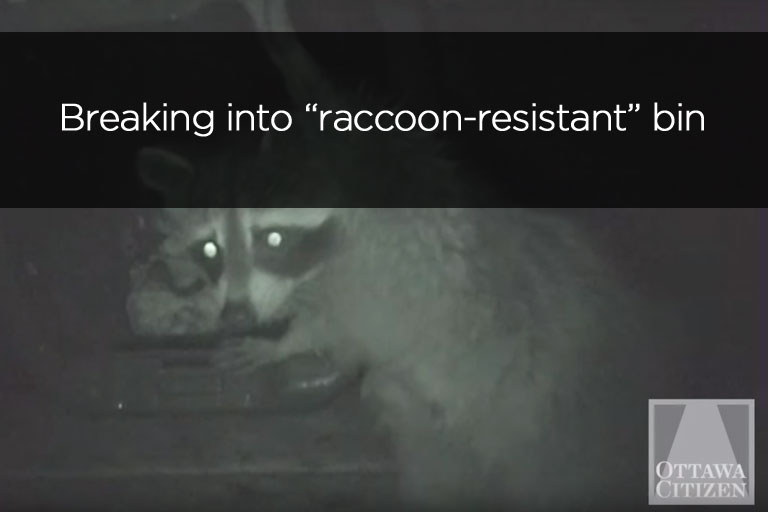 Breaking into raccoon resistant bin