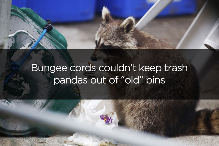 Bungee cords couldnt keep trash pandas out of old bins