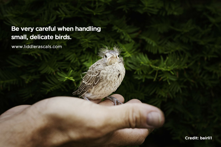 Be very careful when handling small, delicate birds.