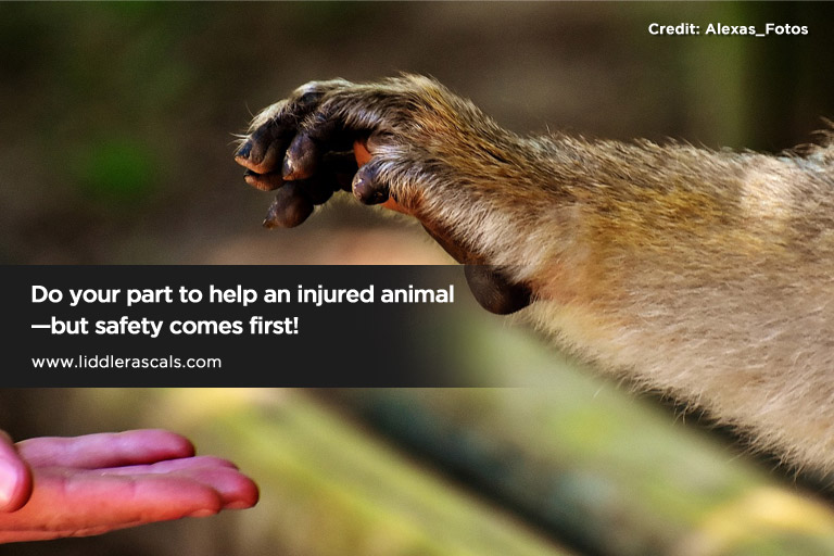 Do your part to help an injured animal—but safety comes first!