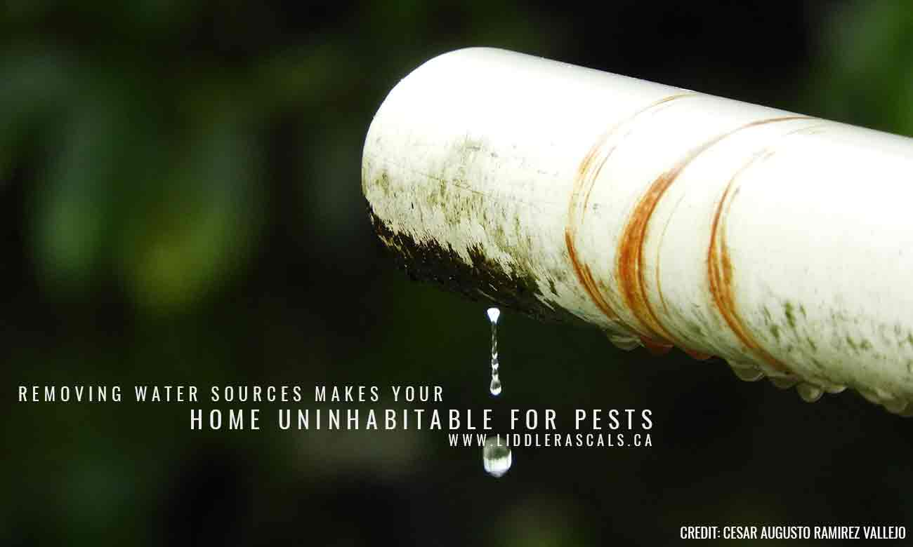 6 Ways to Prevent Pests While Spring Cleaning