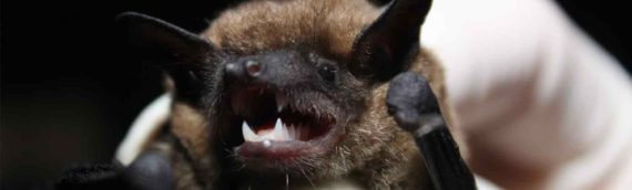 Facts About Bats And How To Keep Them Out Of Your Attic