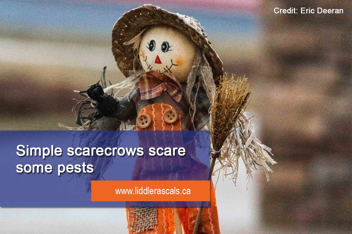 use scarecrows