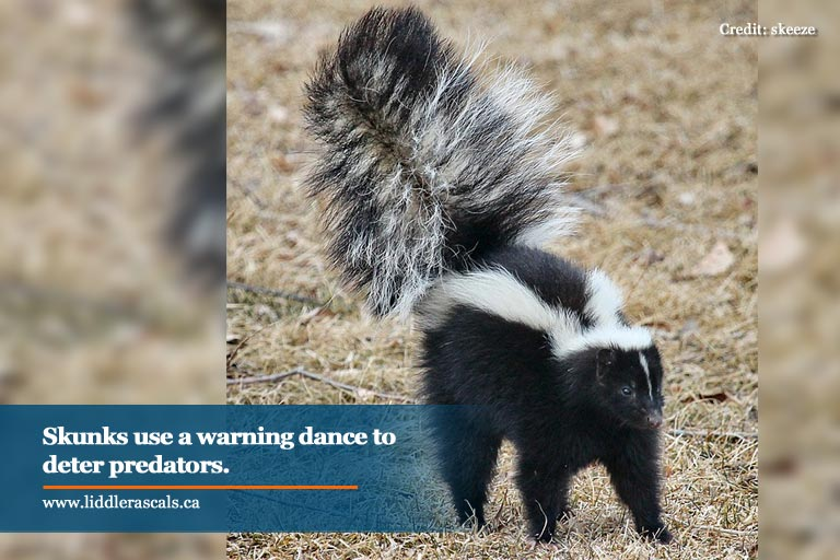 Everything You Ever Wanted To Know About Skunks—and How To Keep Them Out Of Your Backyard
