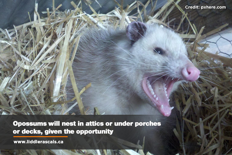 Critters In Your Yard: Deterring Urban Wildlife